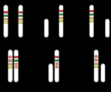 epigeneticsfig2