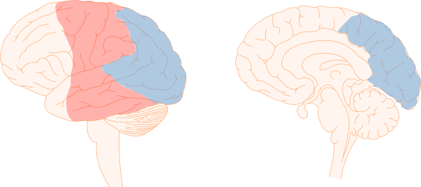 Fig1_occipital-parietal