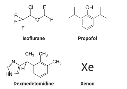 Anesthetic Structures