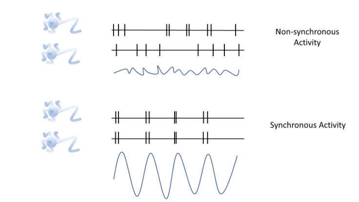 brainwaves_synchrony_fig2