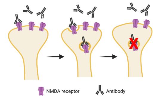 antibodies_memory