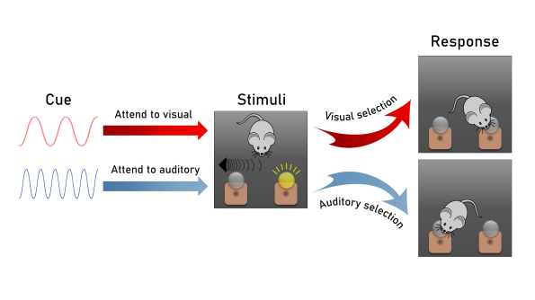 filtering noise sensory gating figure 2